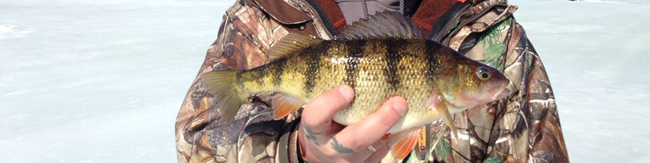 Guided Perch Fishing On Lake Gogebic